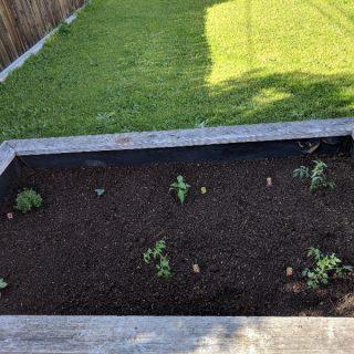 Our Garden & This Week's Menu