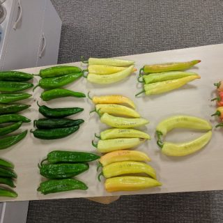 Daily Snap: Pick a Pepper